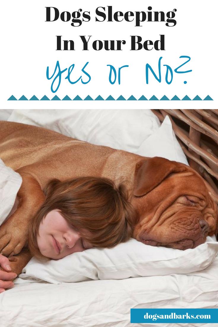 Where Should Dog Sleep Adoption
