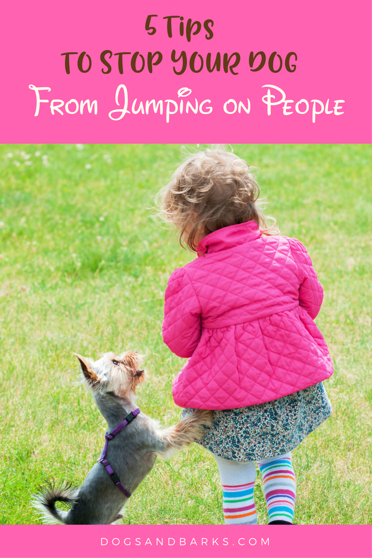 how to keep your dog from jumping on you