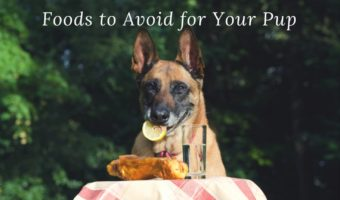 Dog Picnic Dangers – Foods You Should Avoid