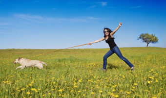 5 Signs your Dog Needs Obedience Training