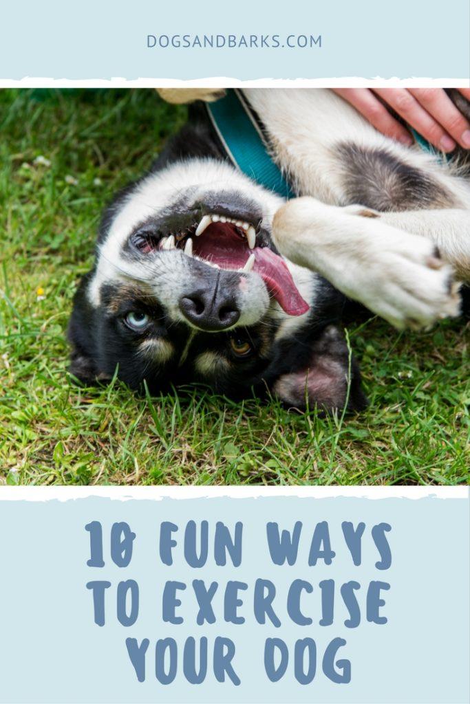 10 Fun Ways to Exercise your Dog