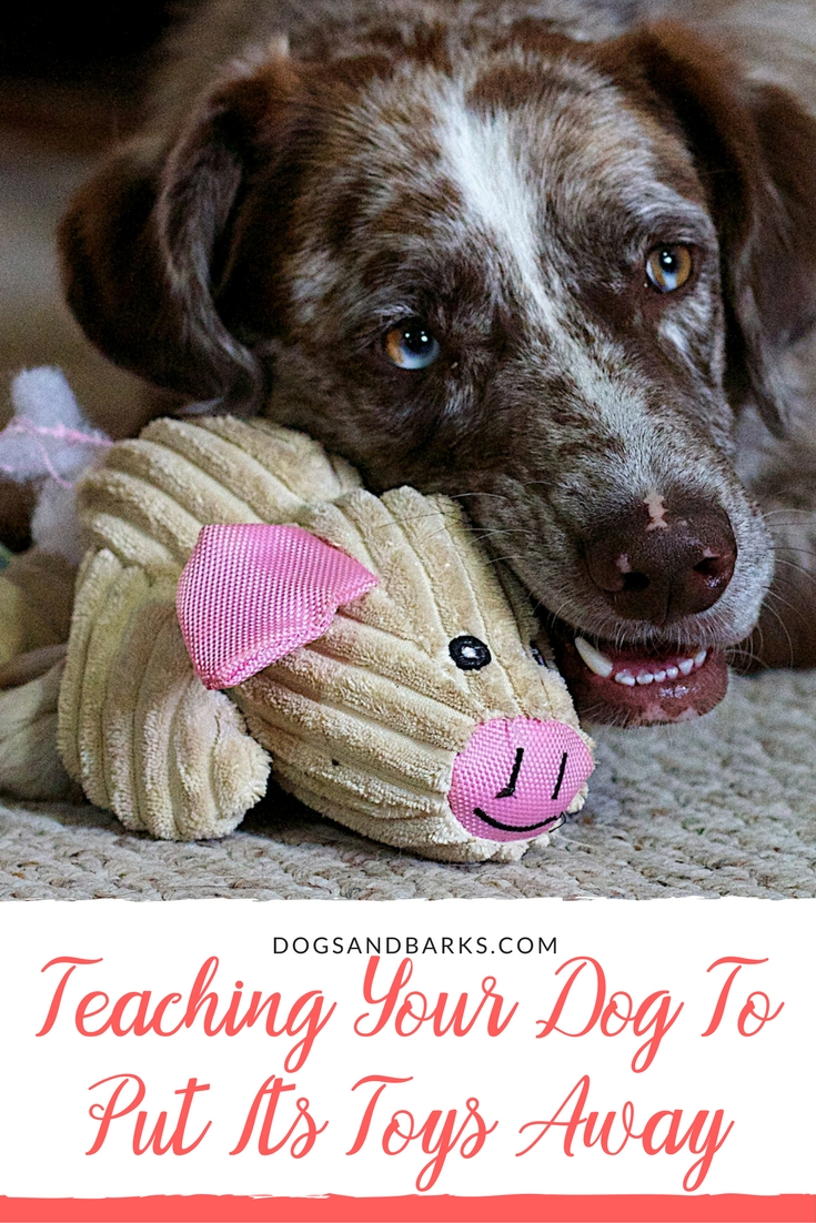Teaching Your Dog To Put Its Toys Away