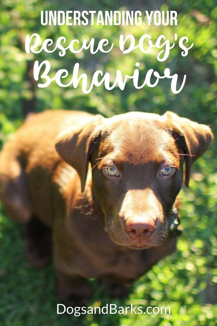 Understanding Your Child S Heart: Understanding Your Rescue Dogs Behavior