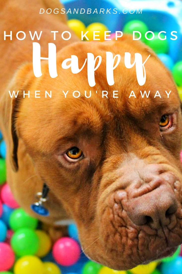 How To Keep Dogs Happy When You Are Away