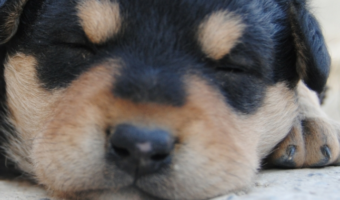 Surviving the First Night with Your New Puppy
