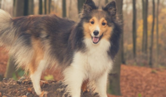 7 Important Things to Know About Your Dog's Body