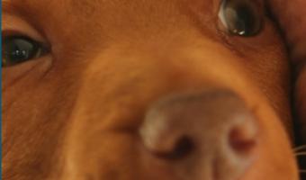 Service Dog vs Emotional Support Dog vs Therapy Dog