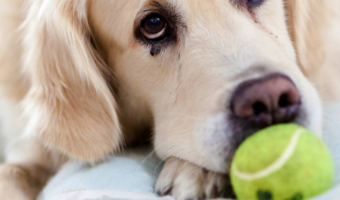 5 Games You Can Play With Your Dog