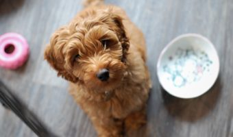 How To Prep A Natural Diet For Your Dog