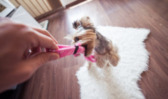 How To Teach Dogs Good Manners