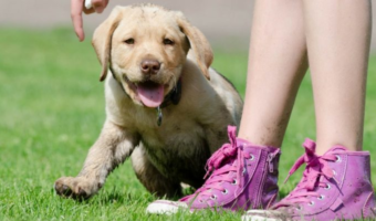 5 Tips for Finding the Right Dog Sitter