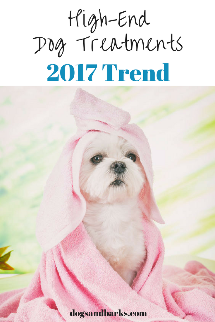 Millennials Spend Lots For High-End Dog Treatments