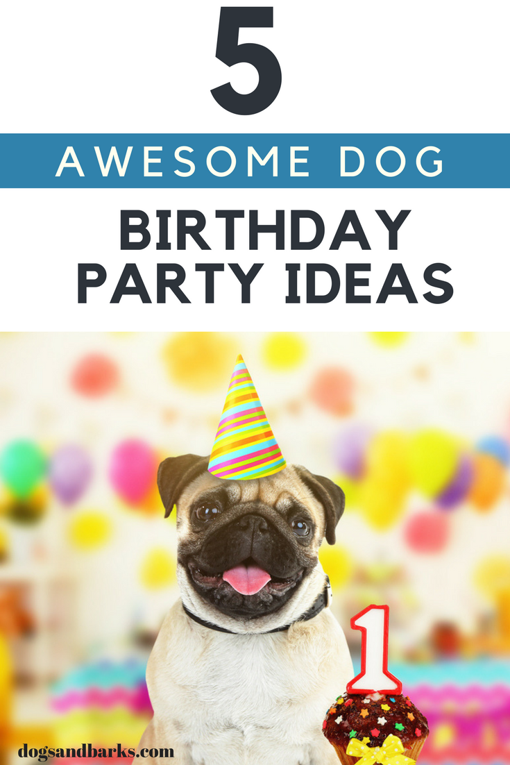 5 Awesome Dog Birthday Party Ideas - Dogs and Bark