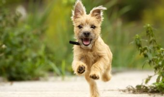 The Importance of Spaying Or Neutering Your Dog