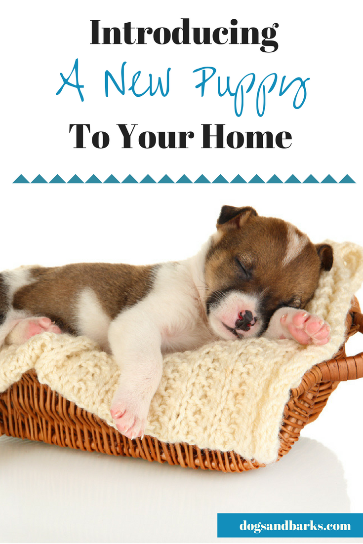 Getting A New Puppy? Tips On Introducing Your New Furry Friend To Your Home