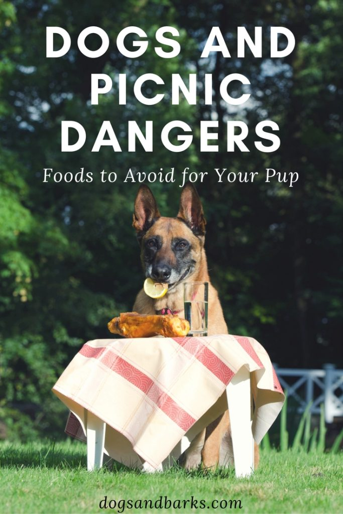 Dogs and picnic dangers