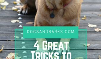 4 Great Tricks to Start Teaching your Pooch Today