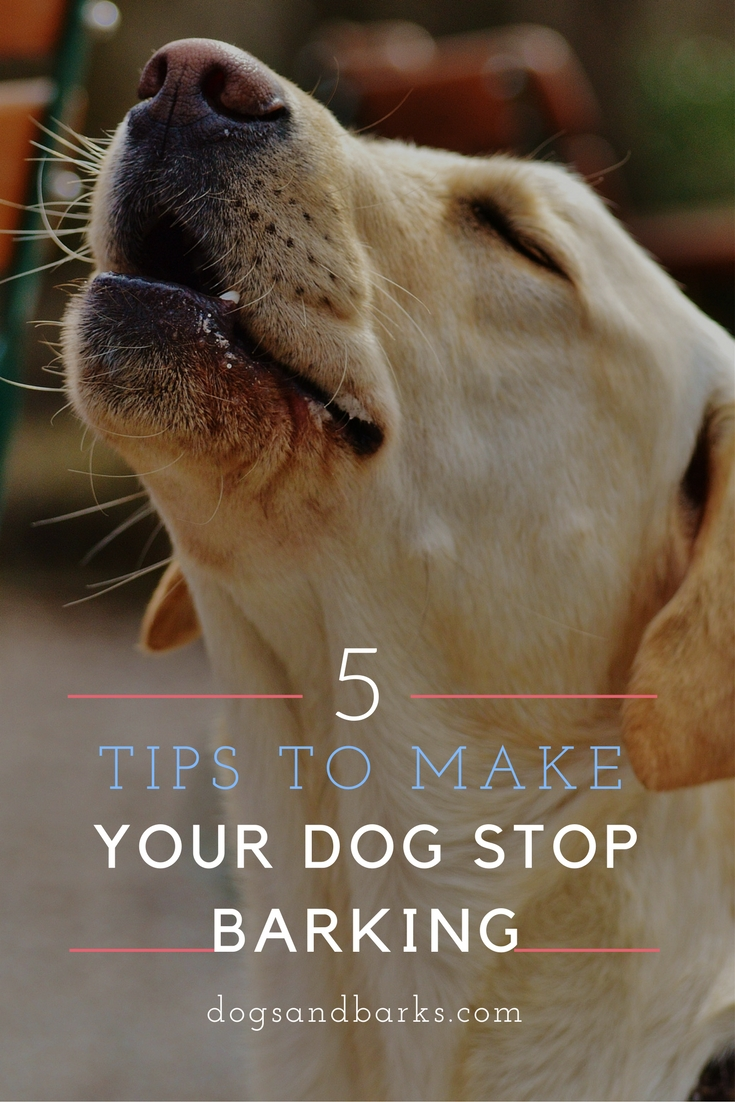 5 Tips To Make Your Dog Stop Barking Dogs And Bark