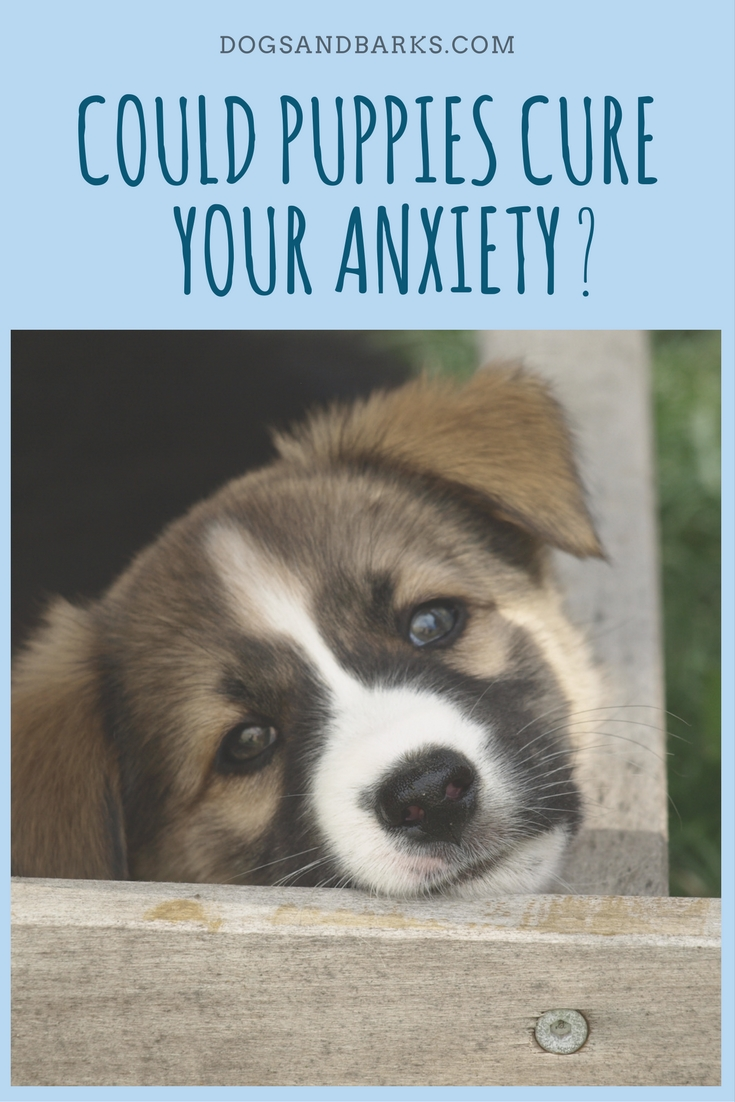 Could Puppies Cure Your Anxiety?