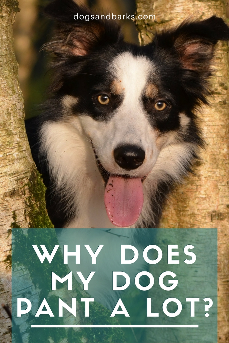 Why Does My Dog Bark A Lot