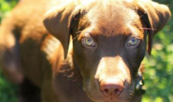 Understanding Your Rescue Dogs Behavior