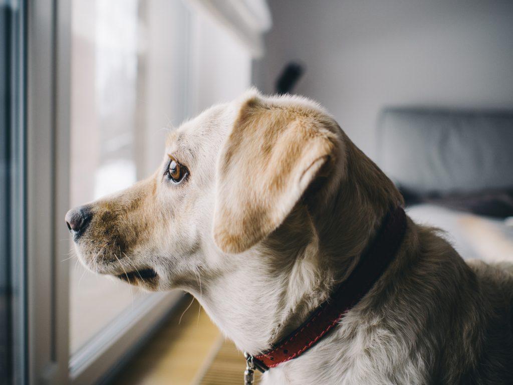 Dog Barks At Home Alone