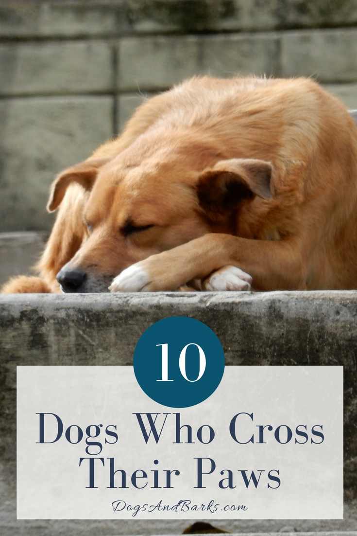 10 Dogs Who Cross Their Paws