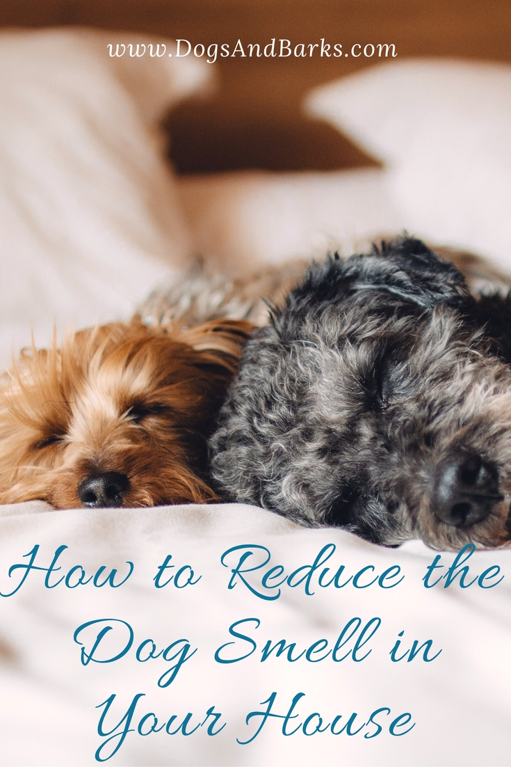 Revealed How To Reduce The Dog Smell In Your House Dogs