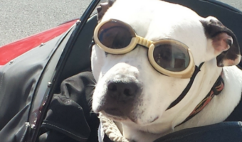 What You Should Pack For A Dog Road Trip