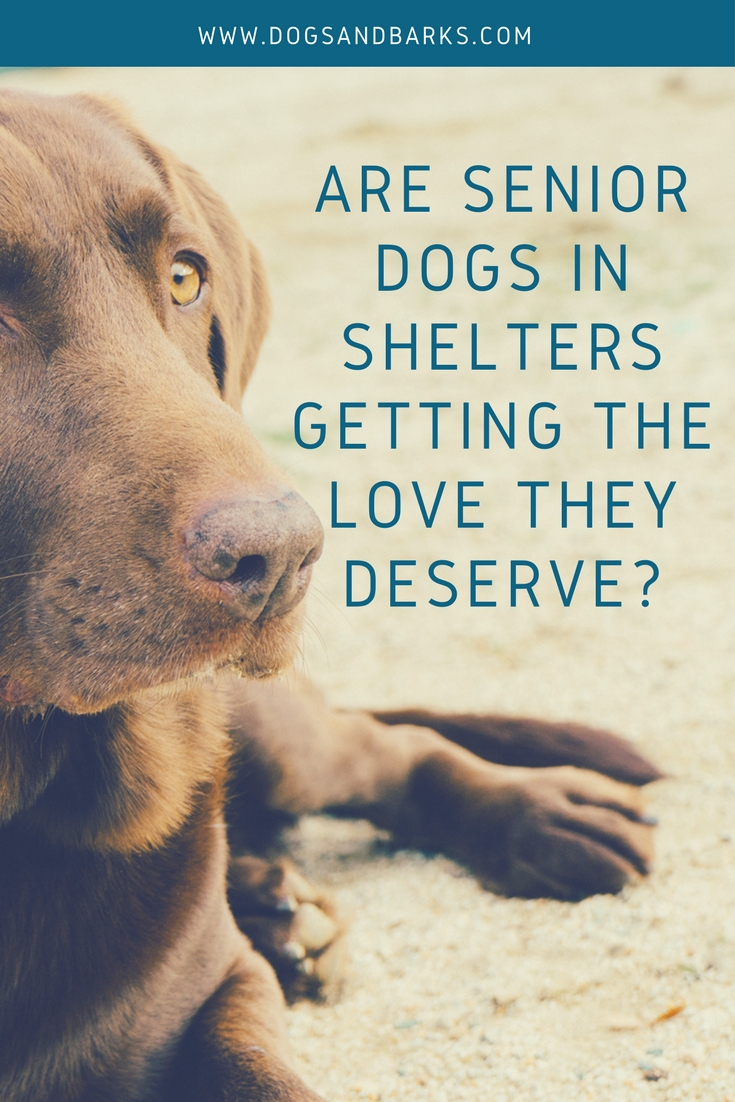 Are Senior Dogs in Shelters Getting the Love they Deserve?