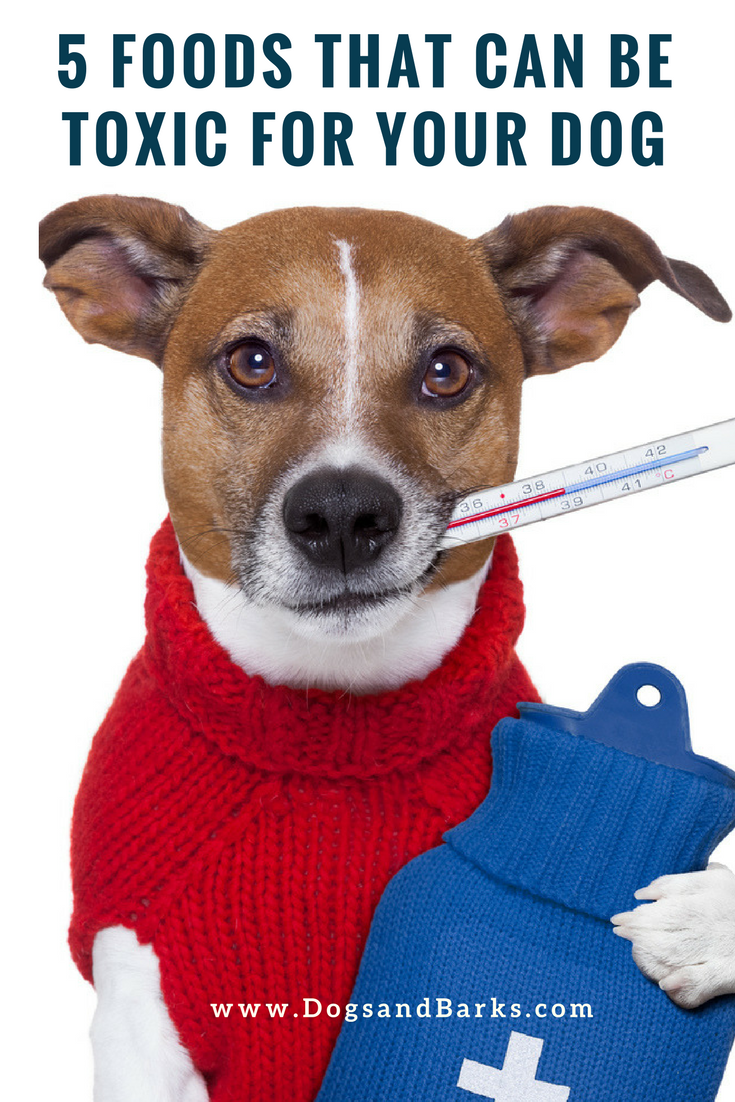 What Can Be Done For Kidney Failure In Dogs
