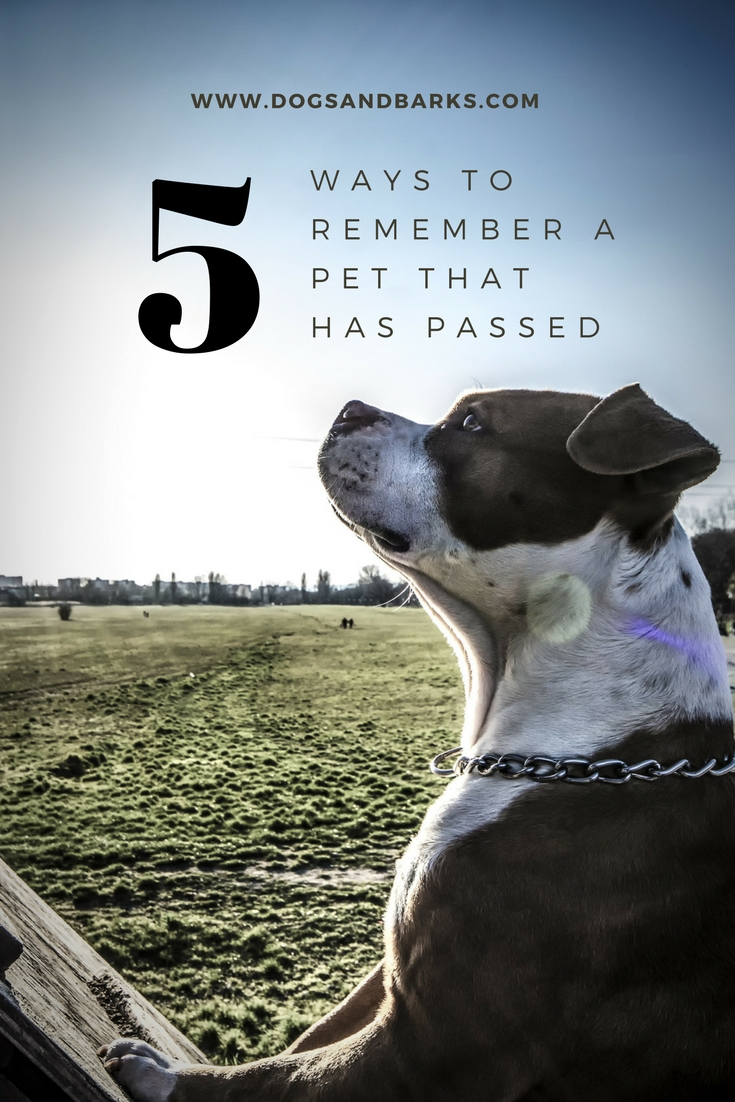 5 Ways To Remember A Pet That Has Passed