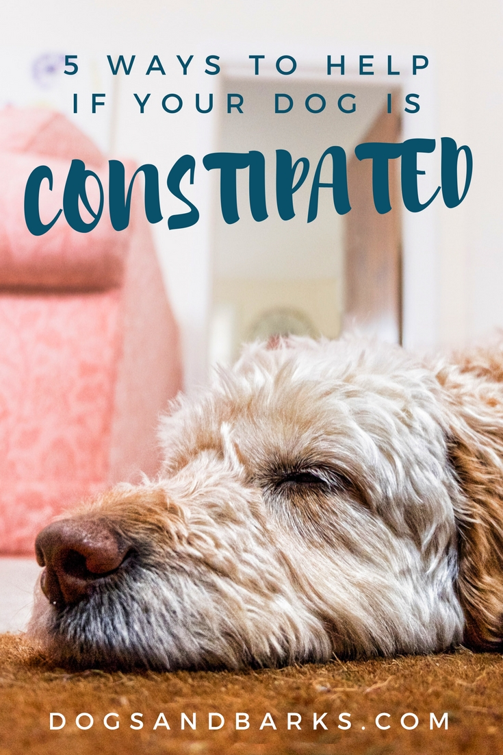 how to help your constipated dog